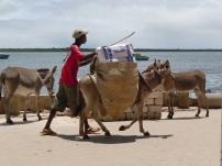 Donkey hard at work