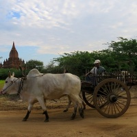 The Timeless Beauty of Bagan
